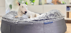 white bull terrier on Ambient Lounge grey dog bed