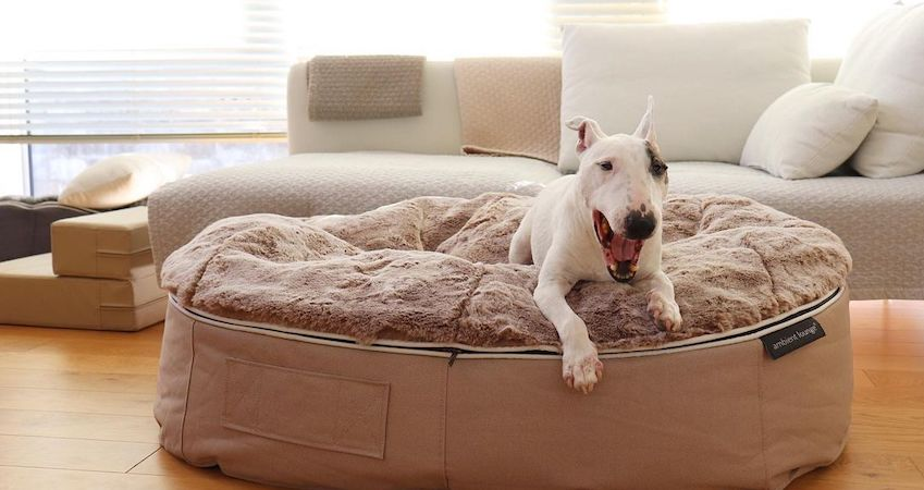 Bull terrier dog relaxing on a calming bed by ambient lounge