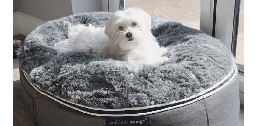 Maltese dog lying down on grey dog bed