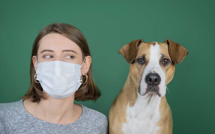 Dogs and coping with Coronavirus Crisis at home in Australia
